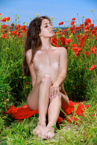 Lingerie and Poppies 11